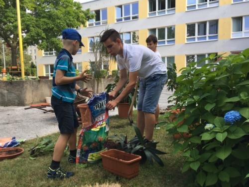Žáci přesazovali pokojové rostliny f01
