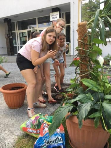 Žáci přesazovali pokojové rostliny f02