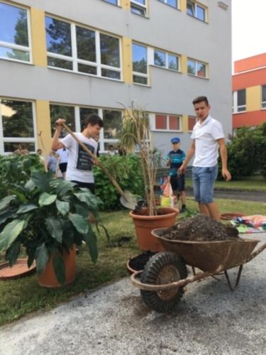 Žáci přesazovali pokojové rostliny f03