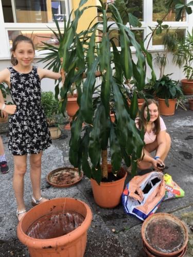 Žáci přesazovali pokojové rostliny f05